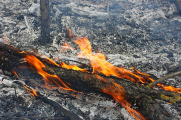Flaming trunk in the burning forest - the natural disaster caused by an anthropogenous factor