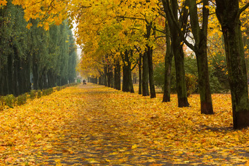 Alley in the bright autumn park