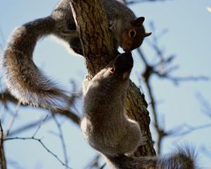 Squirrels Kisses
