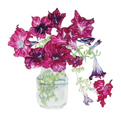 """Watercolor of flowers on white background.""""petunia"""""""
