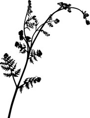 single isolated spring fern black silhouette