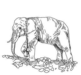 Hand  sketch of elephant