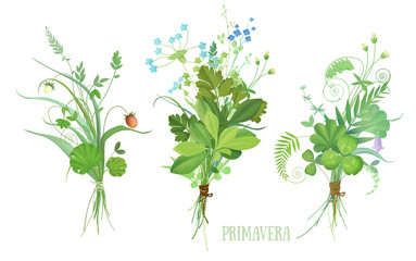 Three small bouquet of wild herbs