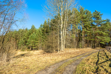 Vintage landscape of forest with dirt road.