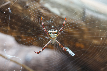 multicolored Spide in tropical forest