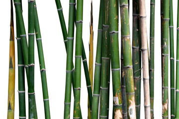 Green bamboo stem isolate on white background