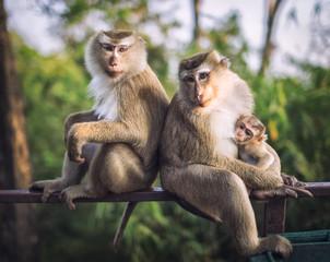 Monkeys. Family.