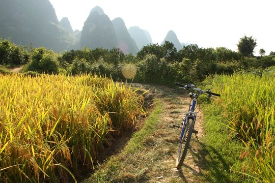 Rice fields of Southern China and a bicycle