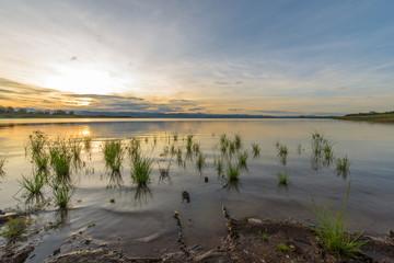 Random little grass in giant lake during sunset.