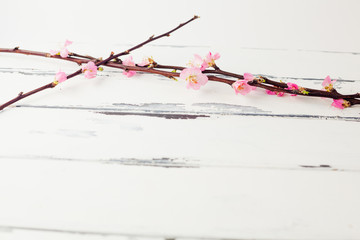 körsbärskvistar mot vit vintage trä bakgrund med plats för egen text