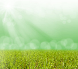 Green grass with blurred bokeh light and sun ray