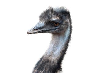 Portrait of emu.