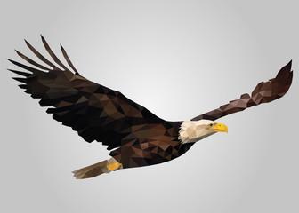 Eagle bird flying free and looking vector.zip
