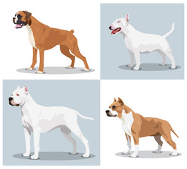 Image set of dogs: Boxer, Bull Terrier, Dogo Argentino, American