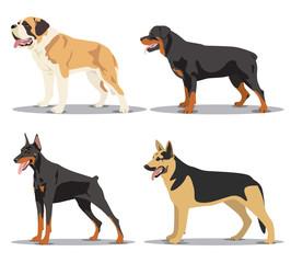 Image set of dogs: Alsatian dog, St. Bernard, Rottweiler, Doberm