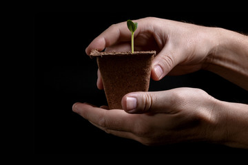 young plant in hands of man