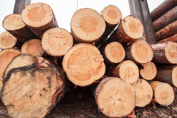 wood logs industry