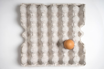one fresh egg on paper tray