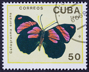 CUBA - CIRCA 1989: A stamp printed in Cuba shows butterfly Catagranma sorana, circa 1989