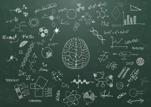 brain science chalkboard