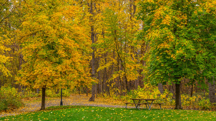 Table with benches for a picnic in the autumn forest