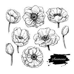 Vector vintage anemone set. Hand drawn illustration.