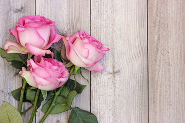 Three pink roses on a wooden platform, top view.