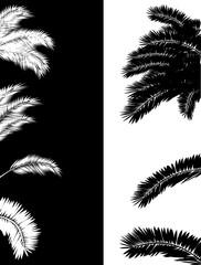 lush palm foliage silhouettes on white and black