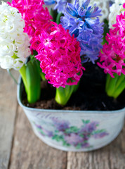 multicolored hyacinths on wooden surface