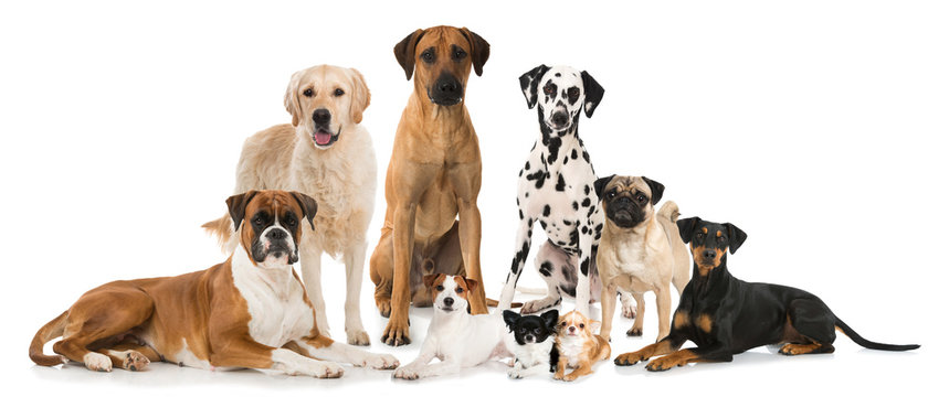 Gruppe verschiedener Hunde - Group of dogs