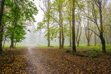 cold fog in autumn forest
