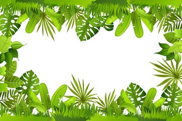 jungle. plants.