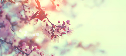 Affisch - Beautiful spring nature scene with pink blooming tree