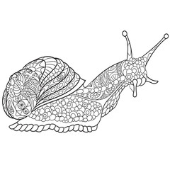 Zentangle stylized cartoon snail, isolated on white background. Sketch for adult antistress coloring page. Hand drawn doodle, zentangle, floral design elements for coloring book.