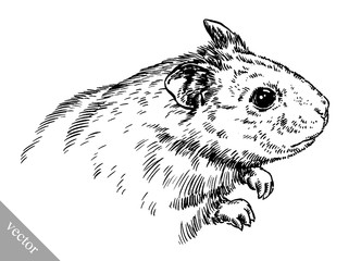 engrave ink draw hamster illustration