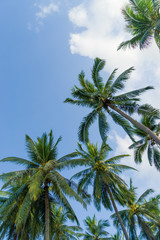 Coconut trees against sky