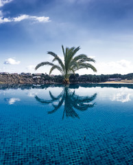 Palm reflected in a pool