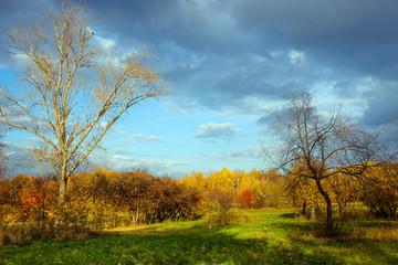 Autumn landscape with green grass