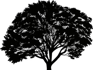 silhouette of large black tree