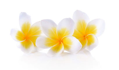 Plumeria White elegant white background.
