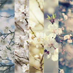 Collection of apricot and plum  flowers in spring time, natural seasonal abstract vintage hipster background