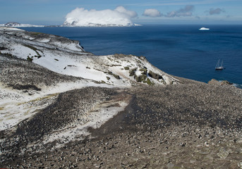 Large colony of chinstrap penguins with blue ocean and snowy island in background, South Sandwich Islands, Antarctica