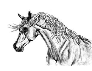 Beautiful  horse illustration with creative unusual mane. Hand D