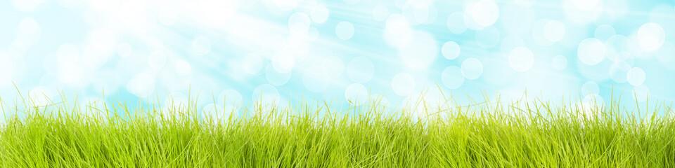 Gras Hintergrund mit blauem Himmel