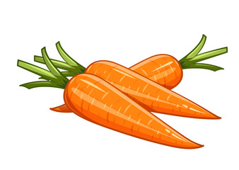 Carrot vector illustration eps10 isolated white background