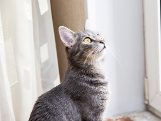 The gray cat lies on a window sill