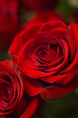 Bunch of red roses bouquet of flowers