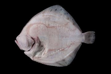 Whole raw disemboweled flatfish bottom side