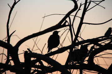 Small bird silhouette at sunset background