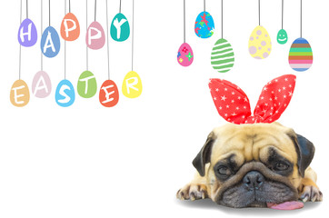 Happy Easter. Dog Pug wearing rabbit bunny ears sleep rest near pastel colorful of eggs with copy space.
